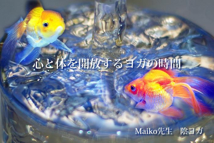 maikotop2